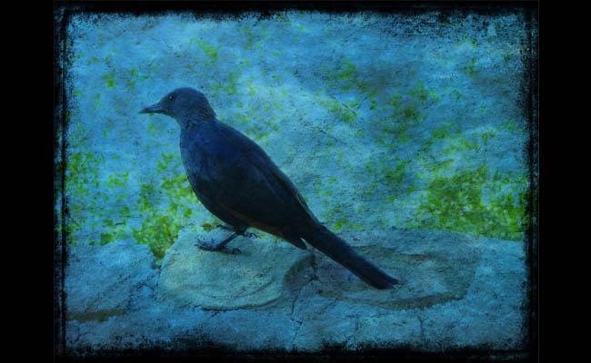 Kurzgeschichte: Der blaue Vogel