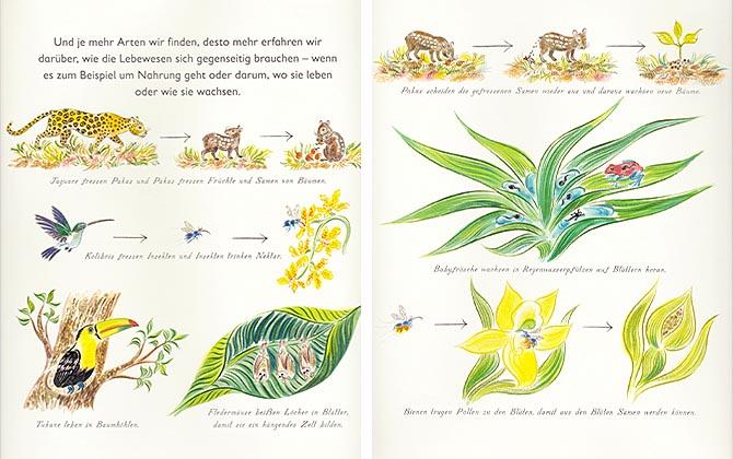 Kinderbücher: Eins zwei drei VIELE - Nicola Davies